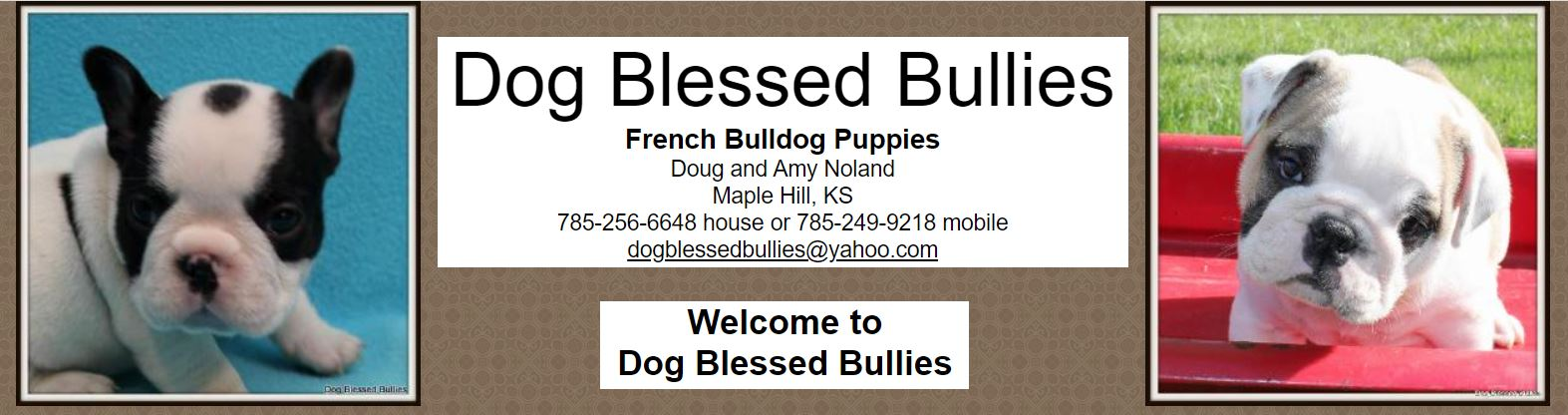 Dog Blessed Bullies